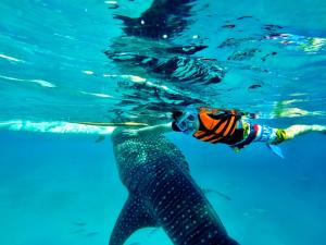 whale shark snorkling